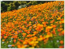 高品質のスペイン産・花粉を使用