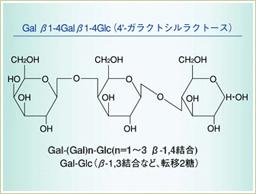 ガラクトオリゴ糖とは