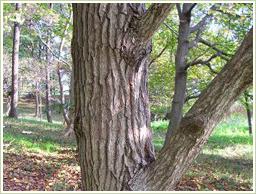 高品質・南米産タヒボ樹皮を使用