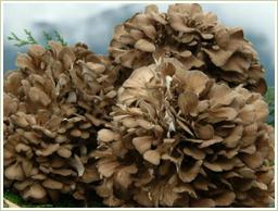 国産・無農薬の舞茸を使用