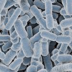 粉末乳酸菌