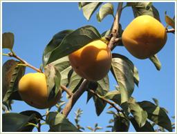 奈良・吉野産の平種無柿を使用