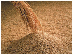 国産の玄米と種麹を使用
